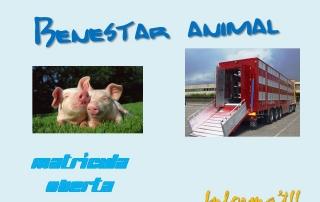 Benestar animal durant el transport