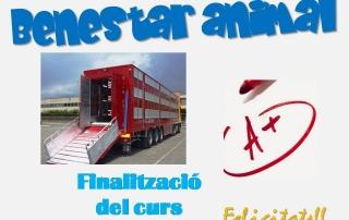 Benestar animal durant el transport - finalització
